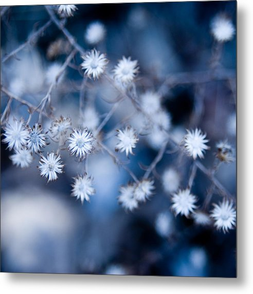 Flower Metal Print featuring the photograph Lonely Winter by Ryan Heffron