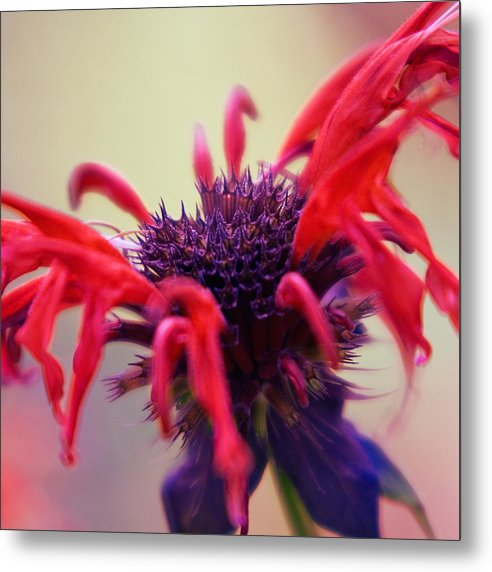 Plant Metal Print featuring the photograph Bloom by Ryan Heffron
