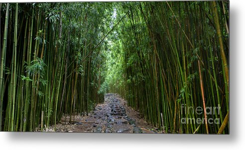 Bamboo Forest Metal Print featuring the photograph Bamboo Forest Trail Hana Maui by Dustin K Ryan