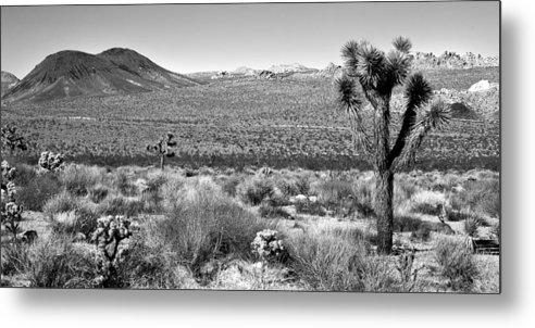 Black & White Metal Print featuring the photograph Josua Tree - Geology Tour Road by Peter Tellone