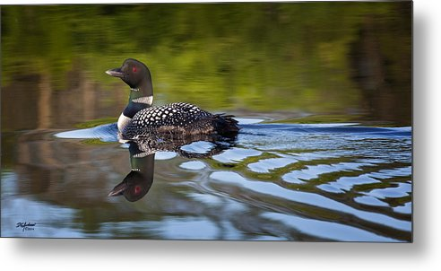 Loon Metal Print featuring the photograph Long Lake Loon by Don Anderson