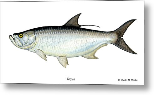 Charles Metal Print featuring the painting Tarpon by Charles Harden
