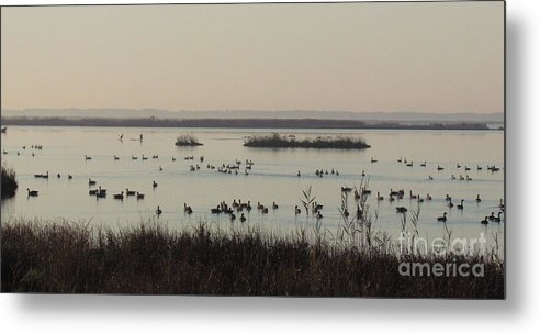 Geese Metal Print featuring the photograph Gaggles by Rrrose Pix