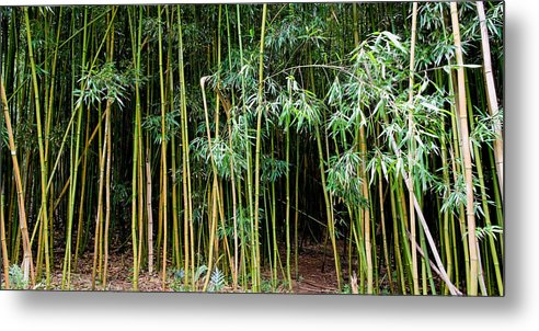 Bamboo Wind Chimes Metal Print featuring the photograph Bamboo Wind Chimes Waimoku Falls Trail Hana Maui Hawaii by Michael Bessler