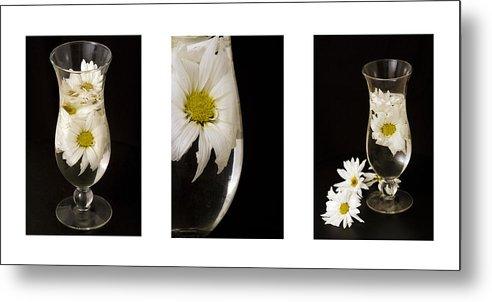 Flowers Metal Print featuring the photograph Daisy Triptych by Ayesha Lakes