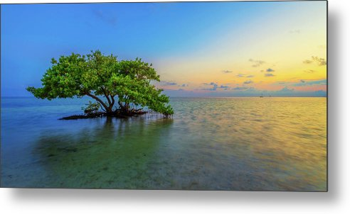 Mangrove Metal Print featuring the photograph Isolation by Chad Dutson
