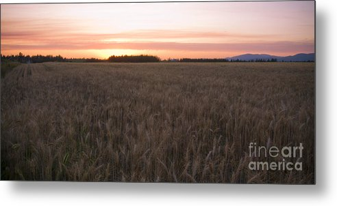 Fields Metal Print featuring the photograph Prairie Pink by Idaho Scenic Images Linda Lantzy