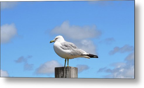 Seagull Metal Print featuring the painting Seagull Beach Art - Sitting Pretty - Sharon Cummings by Sharon Cummings