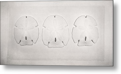 Scott Norris Photography Metal Print featuring the photograph Three Sand Dollars by Scott Norris