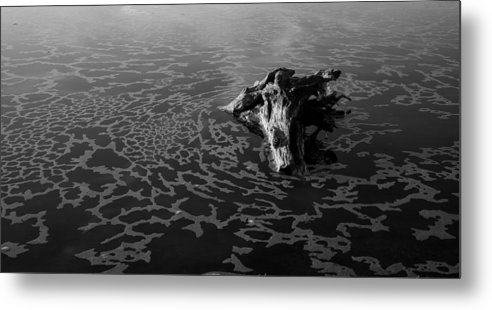 Driftwood Metal Print featuring the photograph Adrift by Alex Lapidus