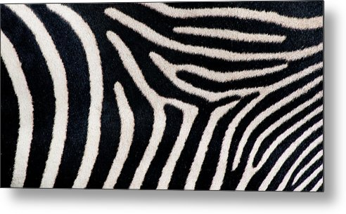 Photography Metal Print featuring the photograph Close-up Of Greveys Zebra Stripes by Animal Images