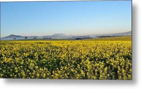 Landscape; Rape Field; Sunrise; Table Mountain; Background; Swartland; South Africa; Nature; Plants; Rural; Yellow; Green; Sky; Blue; Horizon; Metal Print featuring the photograph Table Mountain At The Horizon by Werner Lehmann