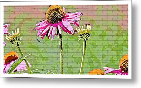 Flower Floral Daisy Pink Metal Print featuring the photograph Racetrack Flower by Alice Gipson