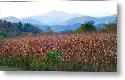 Landscapes Metal Print featuring the photograph Cornfield In The Mountains by Duane McCullough
