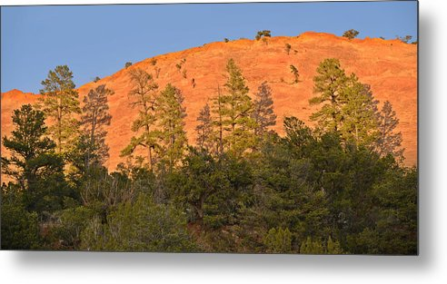 Tree Metal Print featuring the photograph Every Tree In Its Shadow by Christine Till