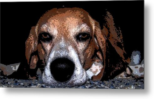 Beagle Metal Print featuring the photograph Lady 5 by April Patterson