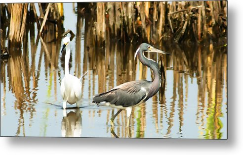 Tricolored Heron Metal Print featuring the photograph The Dance by Norman Johnson