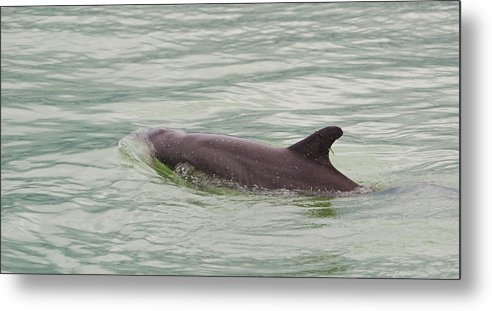 Dolphins Metal Print featuring the photograph Dolphins by Mike Rivera