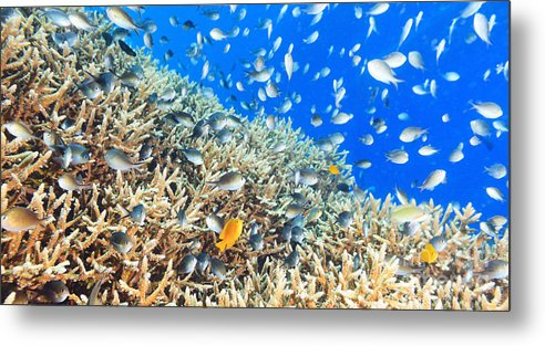 Underwater Metal Print featuring the photograph Coral Reef Panorama by MotHaiBaPhoto Prints