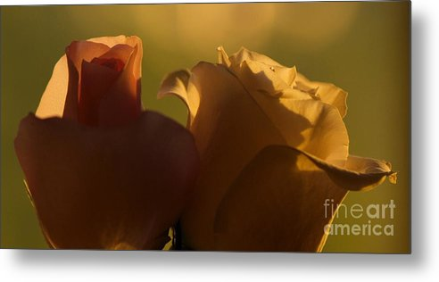 Rose Metal Print featuring the photograph Flowers During Sunset by Sharin Gabl