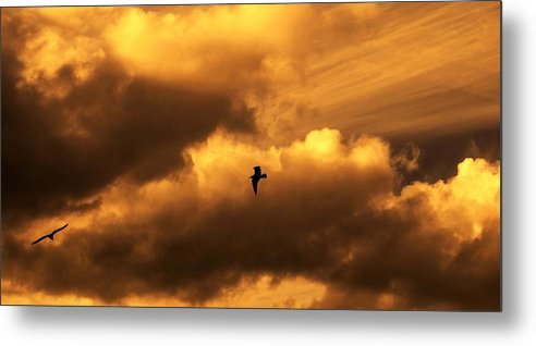 Skyscape Metal Print featuring the photograph Free by Ann Fogarty
