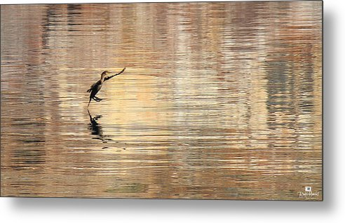 Sea Of Cortez Metal Print featuring the photograph Soft Landing by Russ Harris