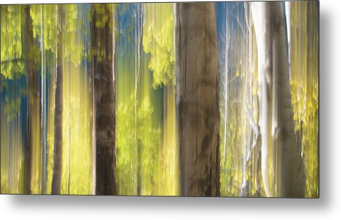 Metal Print featuring the photograph 18x34 by Sheri Frazier