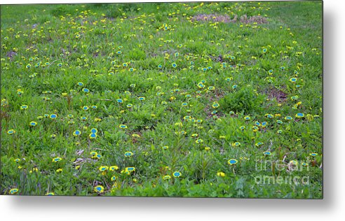 Landscape Metal Print featuring the photograph Dandelions by Donna L Munro