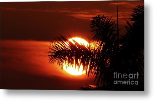 Sunset Metal Print featuring the photograph Palm Sunset by Carlos Amaro