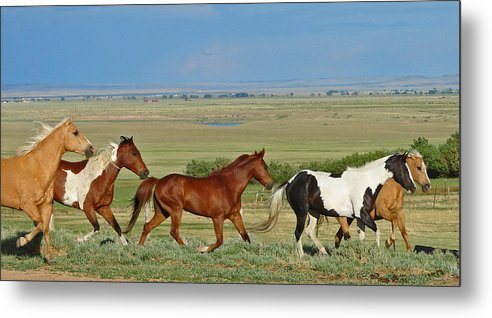 Herd Metal Print featuring the photograph Wild Horses Wyoming by Heather Coen