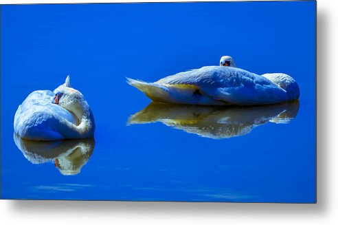 Afloat Metal Print featuring the photograph Swan Sleep by Brian Stevens