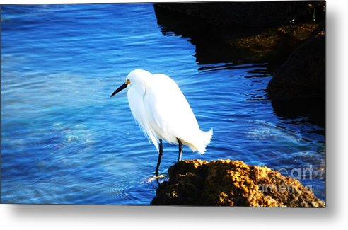 Nature Spring Sea Bird Birds Of Prey Nature Outdoors Florida Fauna Wild Life Tranquility Egret Rocks Blue Water St. Augustine Wood Print Metal Frame Canvas Print Poster Print Available On Greeting Cards T Shirts Tote Bags Shower Curtains Mugs Pouches And Weekender Tote Bags Metal Print featuring the photograph An Egret In St. Augustine by Marcus Dagan