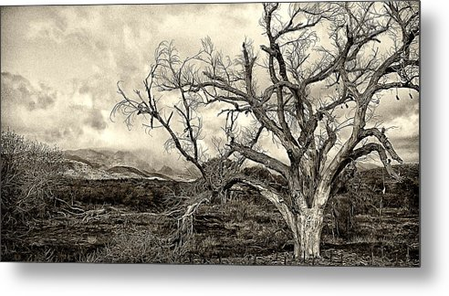 Shoe Tree Metal Print featuring the photograph Magnificent Shoe Tree Near San Felipe Road by Ron Regalado