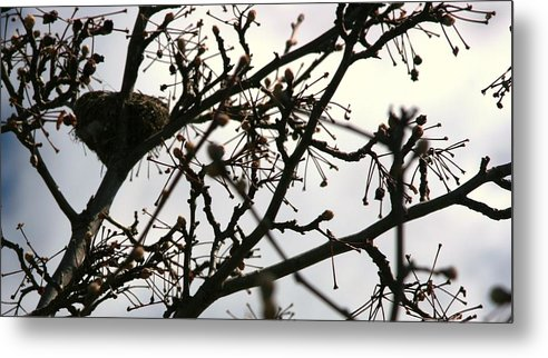 Nest Metal Print featuring the photograph Hummingbird Heaven by Bonnie Lee