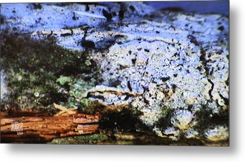 Microscopic Metal Print featuring the photograph Moss On Wood by Michele Caporaso