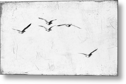 Geese Metal Print featuring the photograph The Leader by Rebecca Cozart