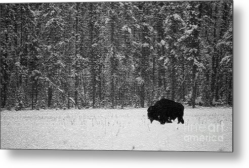 Animal Metal Print featuring the photograph Bison In Snow Mosaic by Barry Shaffer