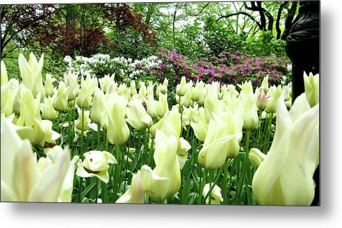 Central Park Metal Print featuring the photograph Central Park Tulips by Lorraine Devon Wilke