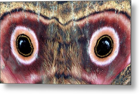 Wings Metal Print featuring the photograph Eyes by Chris Minihane
