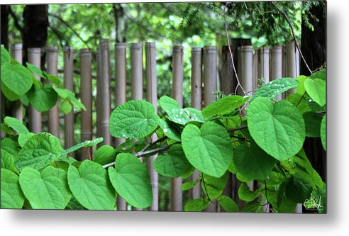 Bamboo Metal Print featuring the photograph Fense by Cate Rubin