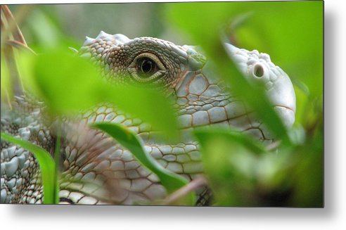 Lizard Metal Print featuring the photograph I See You by April Camenisch
