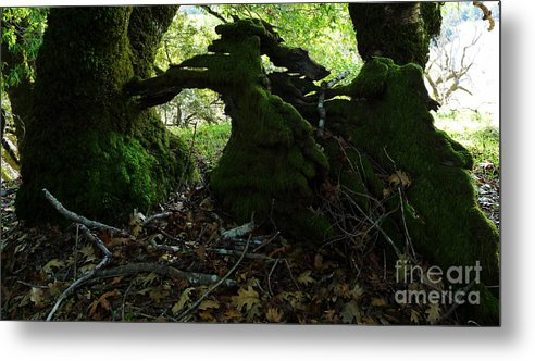 Trees Metal Print featuring the photograph Sculpture In Process by JoAnn SkyWatcher