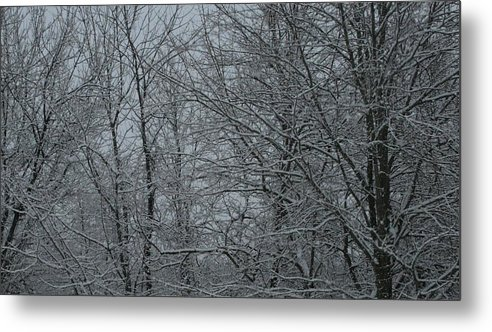 Snow In Woods Metal Print featuring the photograph Snow In The Woods by Christopher Kirby