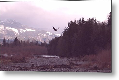 Eagle Metal Print featuring the photograph The Freedom To Fly by J D Banks