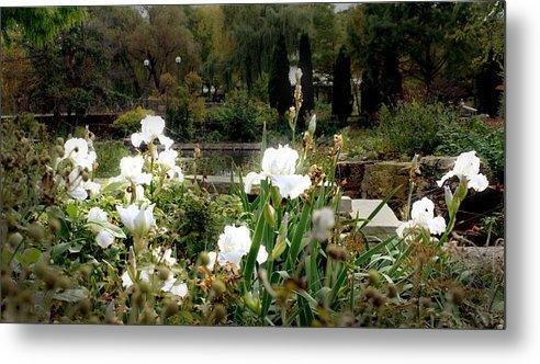 White Irises Metal Print featuring the photograph White Irises by Codee Pyke