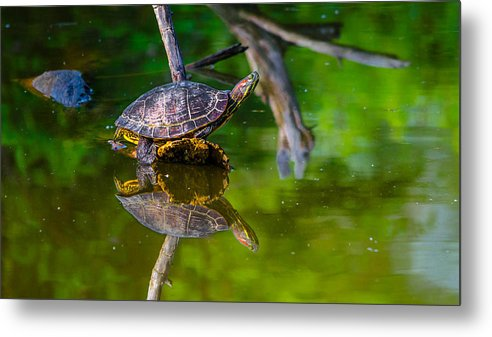 Metal Print featuring the photograph Red-eared Slider by Brian Stevens