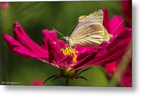 Butterfly Metal Print featuring the photograph A Georgous Butterfly Macrophotography by Stwayne Keubrick