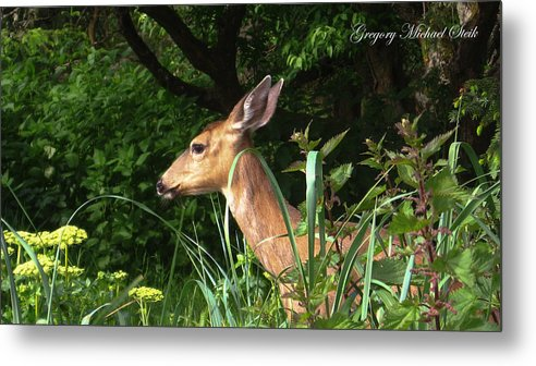 Doe In Tall Grass Metal Print featuring the photograph Doe In Tall Grass by Safe Haven Photography Northwest
