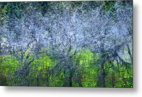 Bosques Metal Print featuring the photograph Forest City by Guido Montanes Castillo