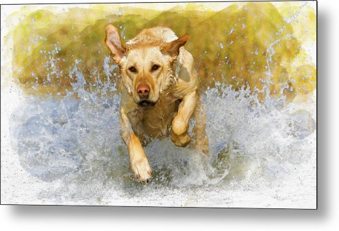 Action Metal Print featuring the digital art Golden Labrador by Don Kuing
